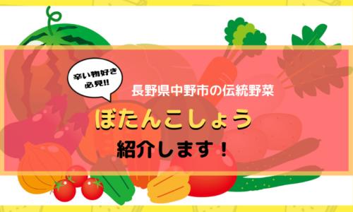 ぼたんこしょう 中野市の信州の伝統野菜を紹介します!