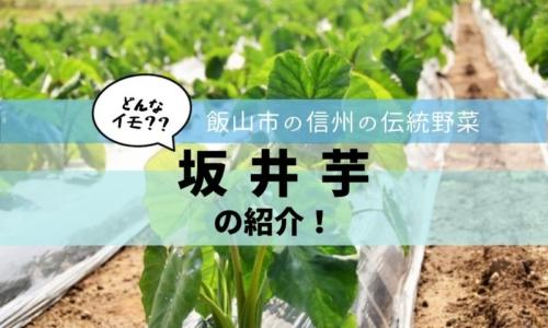 坂井芋ってどんな芋?長野県飯山市の伝統野菜を紹介します!