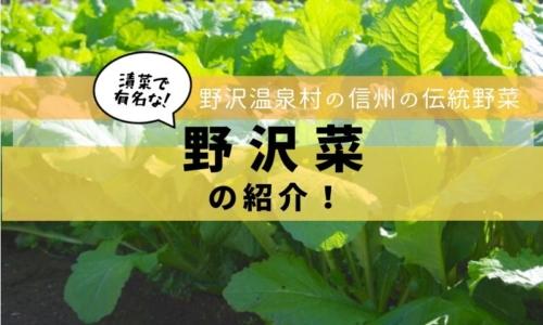 野沢温泉村の伝統野菜「野沢菜」を紹介します!