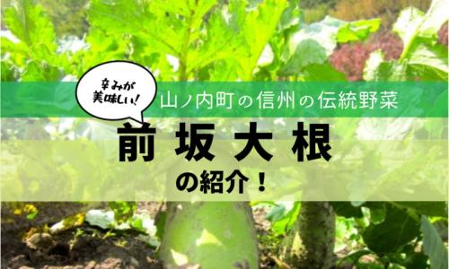 山ノ内町の伝統野菜・前坂大根を紹介します!