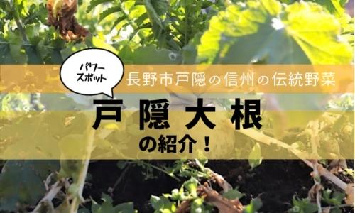 パワーたっぷり長野市戸隠の戸隠大根を深堀!
